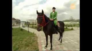 Лошади Рамзана Кадырова