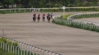 0002319.05.2019 - Пробный приз на лошадях 2-х лет ахалтекинской породы - Аргдагмар