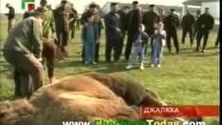 Рамзан Кадыров и Курбан-байрам | Грозный
