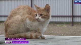 Фонд Кадырова построил дом для пенсионерки и 30 кошек