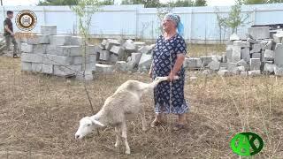 РОФ имени Ахмат Хаджи Кадырова провёл крупную благотворительную акцию