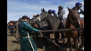 XXVI конные скачки в Чадане открывающие сезон соревнований в Туве