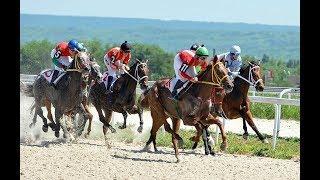 Безудержный азарт, рискованные ставки: сезон скачек стартует  в Пятигорске