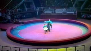 Цирк в г Грозный (Цирк Никулина)